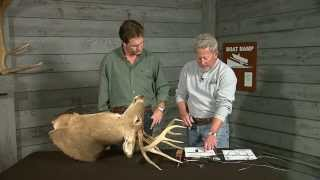 How to score a deer.