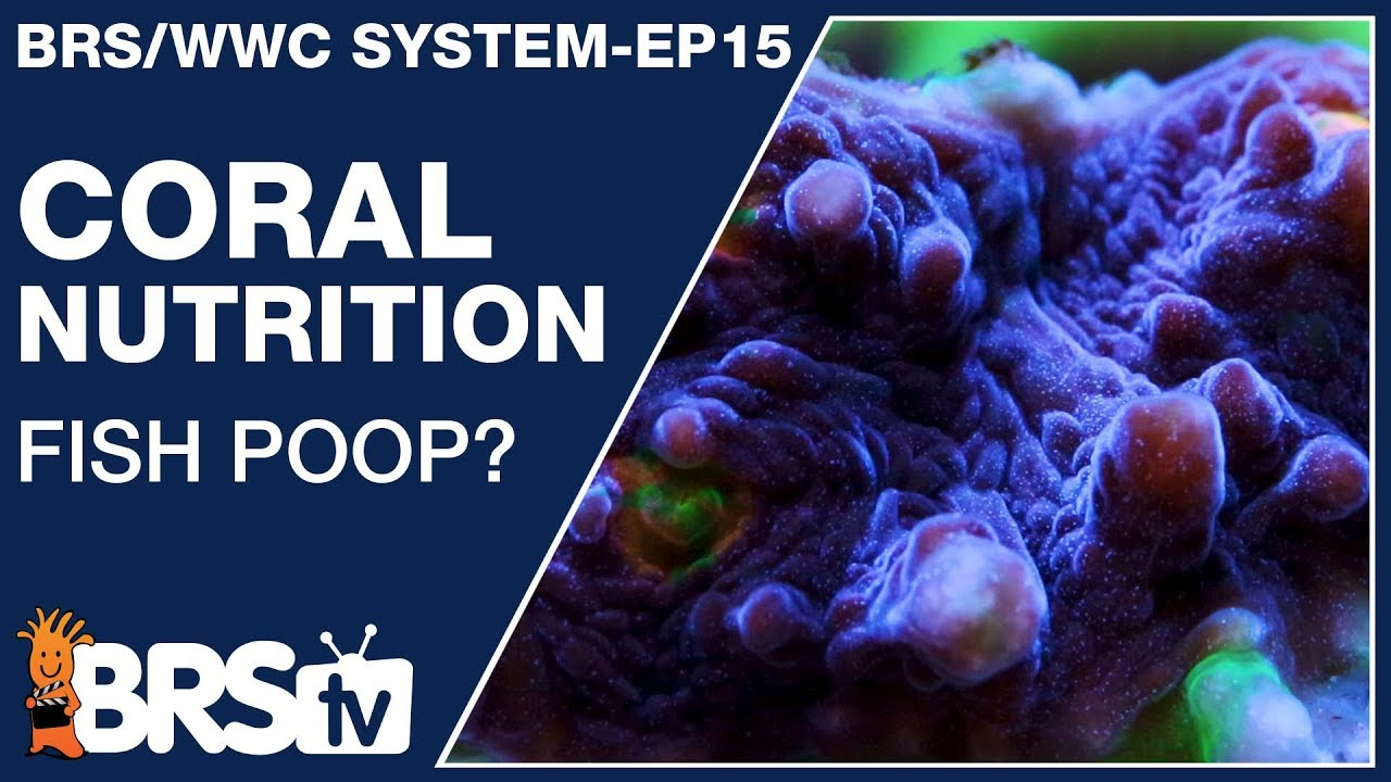 Ep15: What do corals eat and how do I feed corals? (Answer!) - The BRS/WWC System