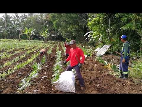 Hakbang ng paa halamang-singaw paggamot
