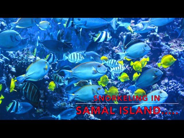 Snorkeling-in-samal-island-almost