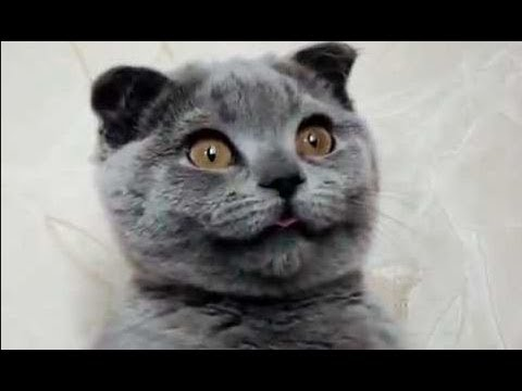 Crazy Cats & Crazy Dogs make Funny Faces – Funny Pets Compilation of the Funniest Animals