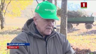 "В Беларуси проходит акция ""Чистый лес"""