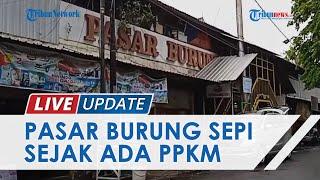 Terdampak PPKM, Pedagang Pasar Burung Karimata Semarang Keluhkan Penurunan Jumlah Pengunjung