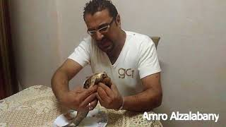 Amro Alzalabany | كارثة تهدد مصر فى شم النسيم داخل الفسيخ ..  تحذير