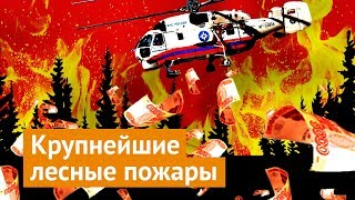 Wildfires in Siberia: why it's necessary to take immediate action
