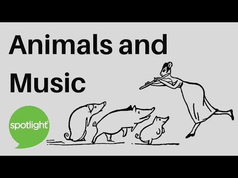 Animals and Music | practice English with Spotlight
