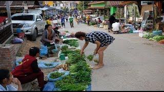 ตลาดเช้าวังเวียง สปป.ลาว กบเขียด คางคก ตลาดของป่า - เที่ยวลาววังเวียง EP6
