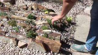 Альпийская горка своими руками видео