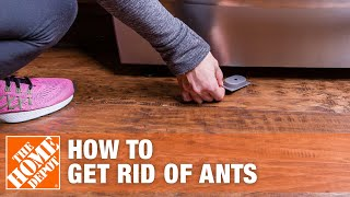 6 Easy Ways to Get Rid of Ants and Prevent Ant Infestations | The Home Depot
