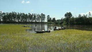 Nhiều diện tích lúa ngập trong nước khiến nông dân Đác Lắc điêu đứng