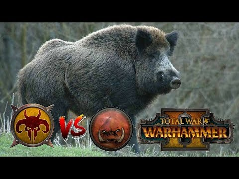 Beastmen vs Greenskins | CHARGE OF THE BACON - Total War Warhammer 2 (видео)