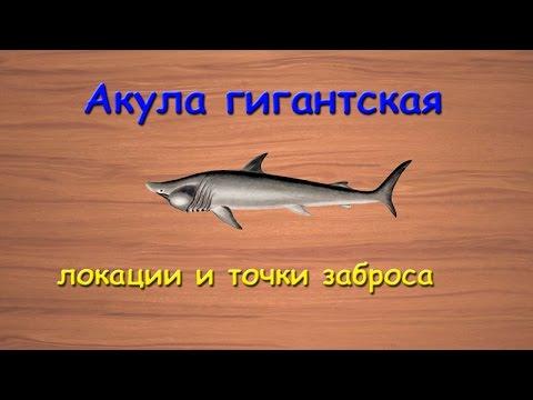 Русская Рыбалка 3.99 Акула гигантская - локации и точки заброса