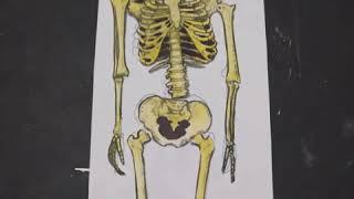 Dibujando un esqueleto | aprende a colorear un esqueleto