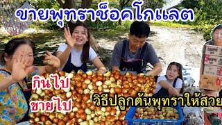 เก็บพุทราช็อคโกเเลตขาย EP.214 วิธีปลูกต้นพุทราให้สวย เเละต้นเตี้ย 대추 Jujube สะใภ้เกาหลี by Korean