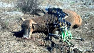 preview picture of video 'Big Island Hunting - 2012'