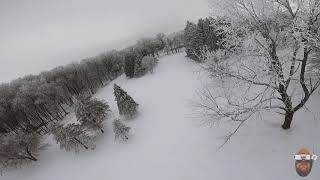 FPV Daily winter tree surfing