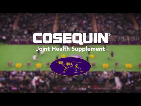 Cosequin DS (Double Strength) for Dogs & Cats Video