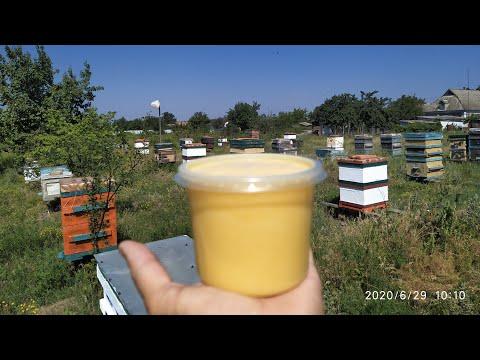 Как придать товарный вид мёду с подсолнуха