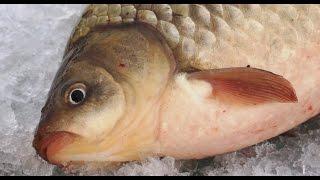 Интересные факты о зимней рыбалке