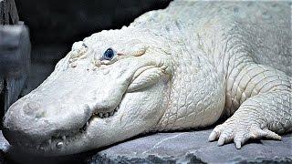 15 Most Bizarre Reptiles
