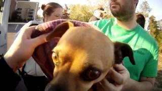 Thankyou rescues and ruff riders transport. Macon bibb animal welfare
