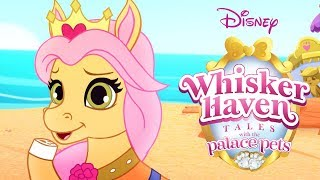 Whisker Haven Tales With The Palace Pets | Season 3: Full Episodes 1-8 | Disney