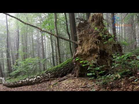 Poranek w lesie Lipowym