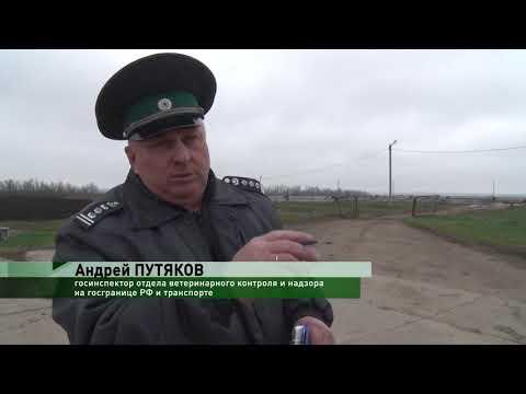 В Ростовской области Управлением Россельхознадзора проконтролирована отправка в Грузию сельскохозяйственных животных