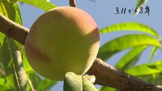 3.11から8年② 福島の果樹農家の今