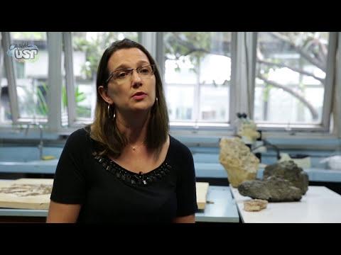 Em exposição na USP, fósseis do Araripe seriam contrabandeados