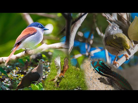 ENDEMIC WILDLIFE OF MAURITIUS