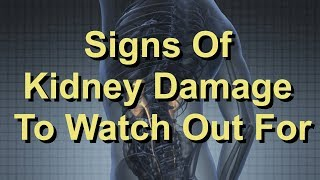 Signs Of Kidney Damage To Watch Out For