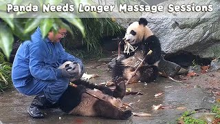 How I Wish I Could Be A Panda Massage Therapist | iPanda