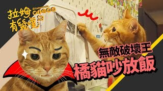 This is a hungry cat!!┃LAMUNCATS ♧
