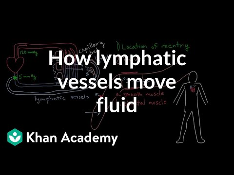 How lymphatic vessels move fluid (video) Khan Academy