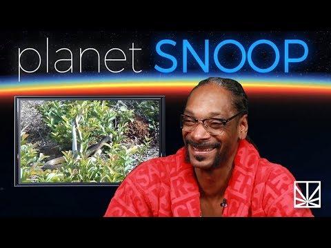 Snoop Dogg kommentiert eine Tierdoku: Schlangen beim Geschlechtsakt