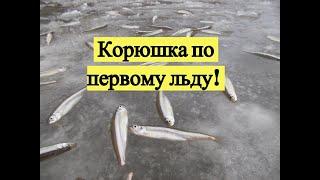 Рыбалка в де кастри на корюшку