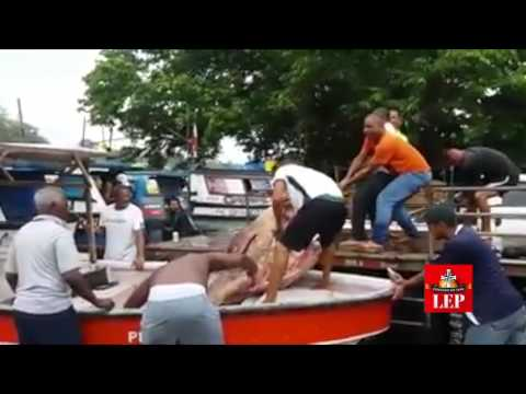 Pescadores atrapan gigantesco mero en el puerto de Coquira