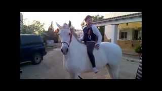 Finca Barroco,Verkaufspferd,MARGARETA,Andalusier Stute,11 Jahre,VERKAUFT