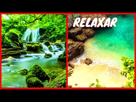 Natureza - Sons de chuva - Pssaros - Sons do oceano - Musica Relajante -  Meditation sound - sv135