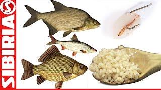 Рыбалка перловая каша как готовится для прикормки