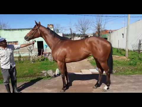 Lote SONORA (BRZ)