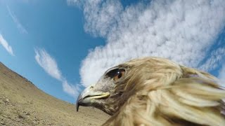 GoPro: Hunting a Fox From an Eagle