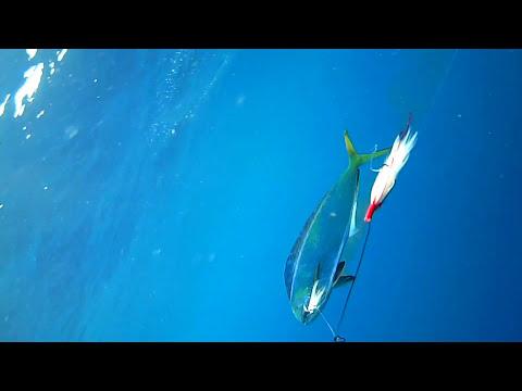 Pesca de llampua en Cartagena con curricán - Cámara subacuática waterwolf - El Equipo Morralla