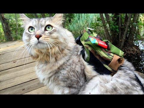 Cat HAL hiking with backpack / 猫リュックでお散歩