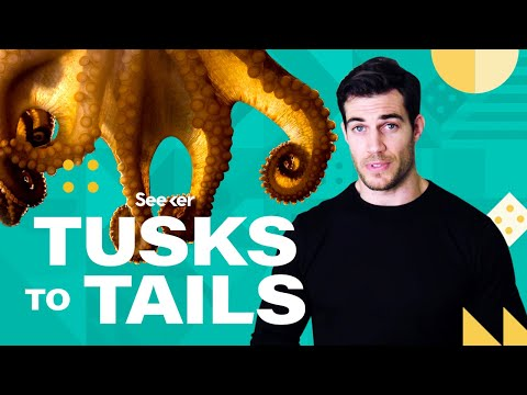 Octopuses Can Smell, Feel, AND Think With Their Arms, Wait What?