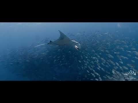 Seven Seas Solitude 2 - Epic Trip 2021