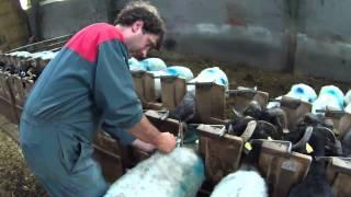 preview picture of video 'Transhumance des brebis à Larrau 2012 (première partie)'