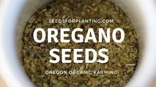 Oregano Seeds For Planting (Germination & Growing Help)