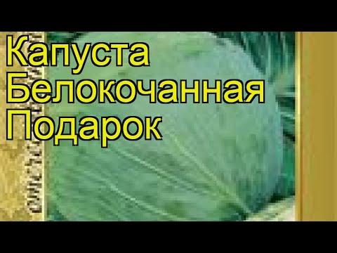Капуста белокочанная Подарок. Краткий обзор, описание характеристик, где купить семена Podarok